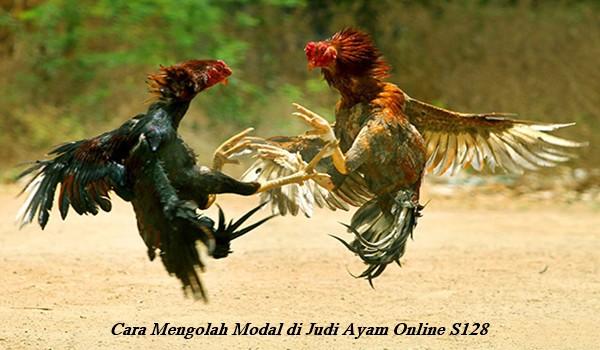 Cara Mengolah Modal di Judi Ayam Online S128